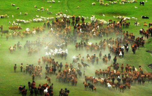 内蒙古70周年:大庆迎来新机遇