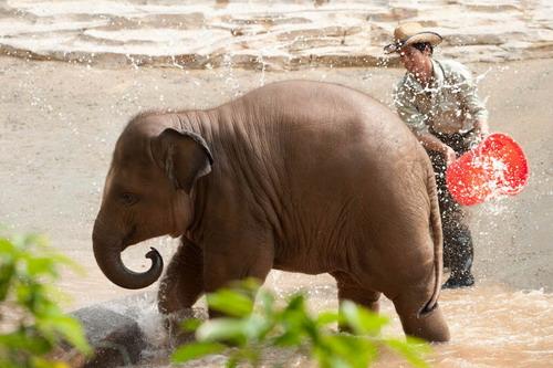 壁纸 大象 动物 牛 500_333