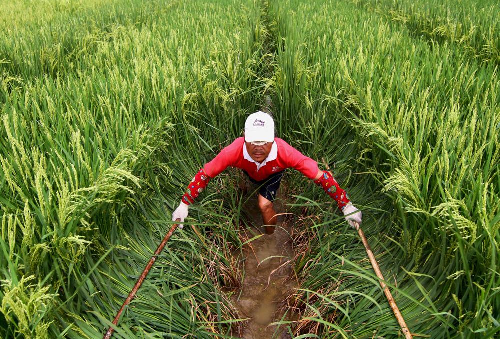 La chine - Dose de riz par personne ...