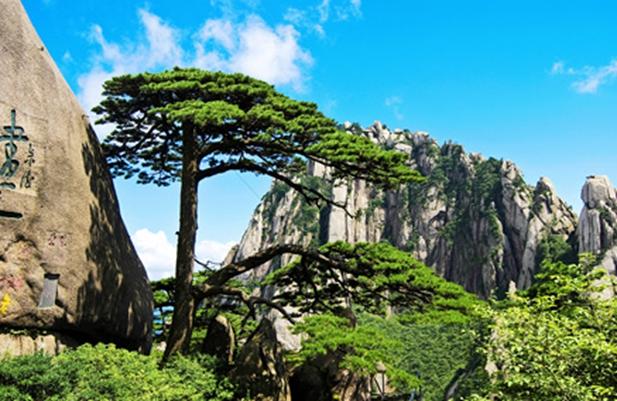 """近年来,黄山风景区牢固树立和践行人与自然和谐共生的理念,围绕"""""""